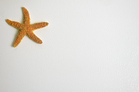 star fish: Orange Star Fish on a white background with text space