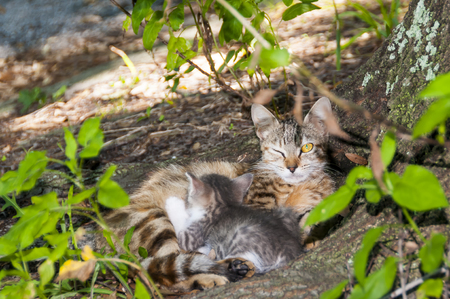 cute kittens: Yellow eyed cat with kitten keeping watch with one eye open