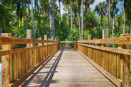 elevated: Elevated wooden walkway bridge over swamps in heavy wooded area