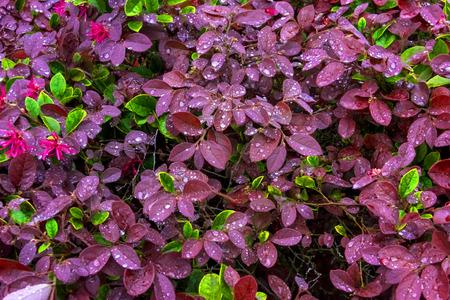 Pink and Green petals after a fresh rain soak Stock Photo