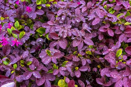 Pink and Green petals after a rain soak Stock Photo