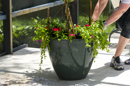 Getting ready to work on a flower pot needing a fix up Planting bright red flowers in a new flower pot Stock Photo