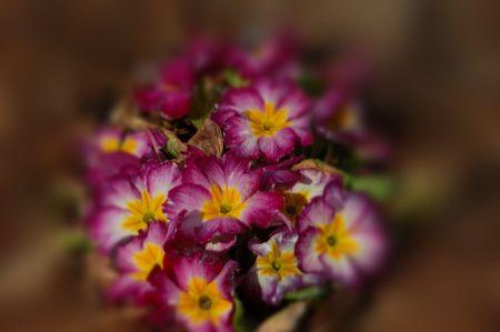 Flowers in a dream? Stok Fotoğraf