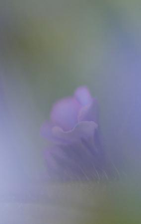 Purple flower haze