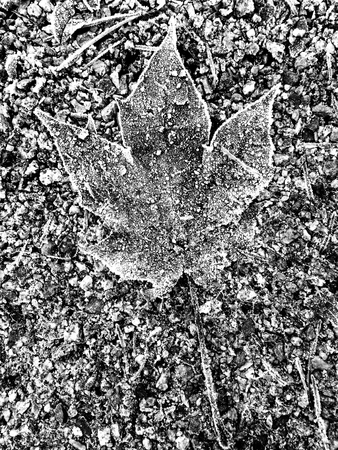 Frosted leaf on frozen ground