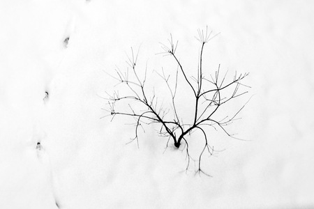 Black tree with footprints in snow Stock Photo