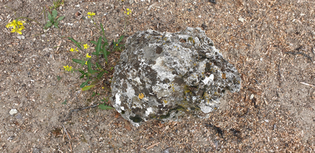 Rocky ground stone, wild daisy in a garden