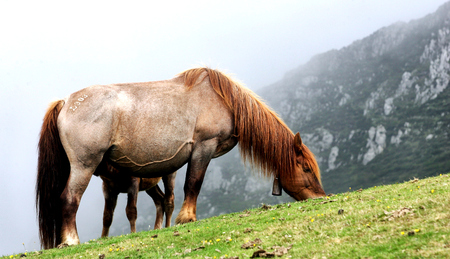 asturias: a horse in the mountains of Asturias, North of Spain