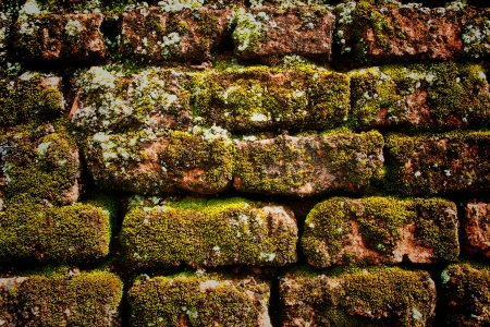 moss on the old brick wall photo