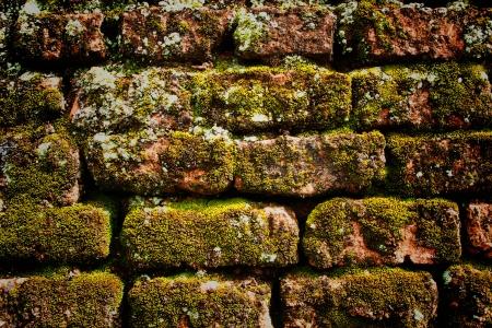 mousse sur le vieux mur de briques