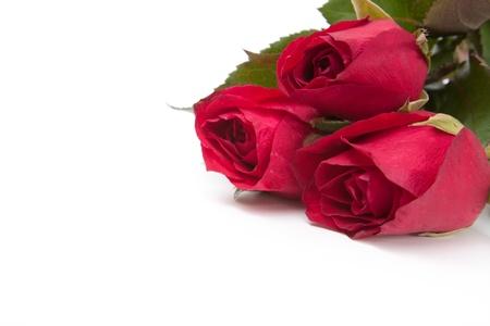 Image de roses sur fond blanc. Banque d'images