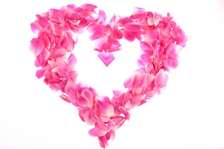 bed frame: frame of pink rose petals  frame of pink rose petals