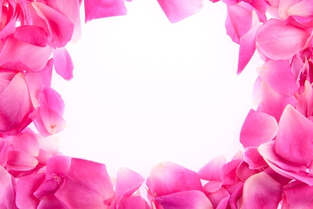 frame of pink rose petals