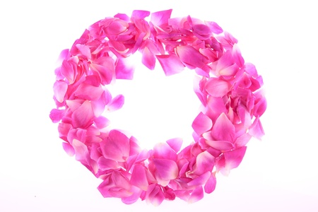 frame of pink rose petals isolated Stock Photo - 11707114