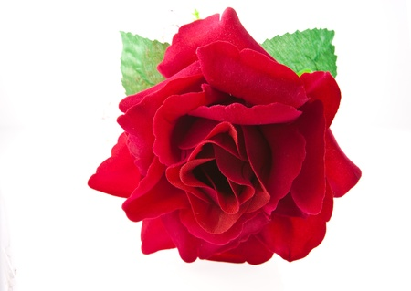 perfect red rose artificial isolated on white photo