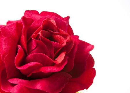 flowergirl: closeup perfect red rose artificial isolated on white Stock Photo