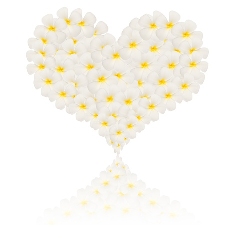 reflaction: frangipani created in heart shape with reflaction isolated on white Stock Photo