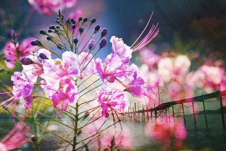 grunge paper flower and sea landscape view for general background photo