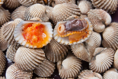 Blood Cockle or scallop with seafood sauce in Thailand Stock Photo - 12657236