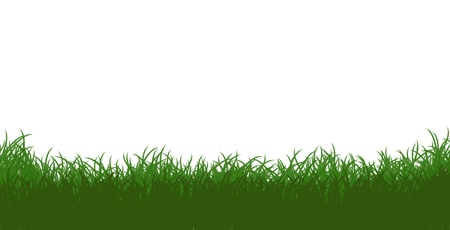 Green Grass Isolated on White Stock Photo - 12938272