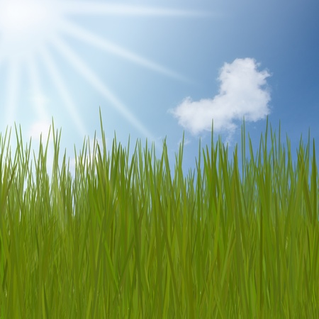 summer Abstract Background with grass against sunny sky photo
