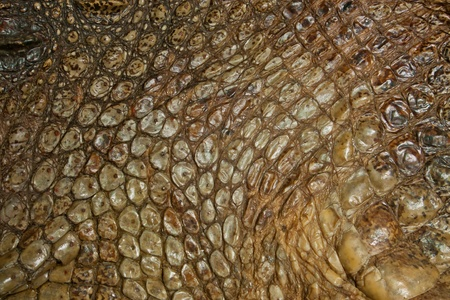 natural crocodile skin texture photo