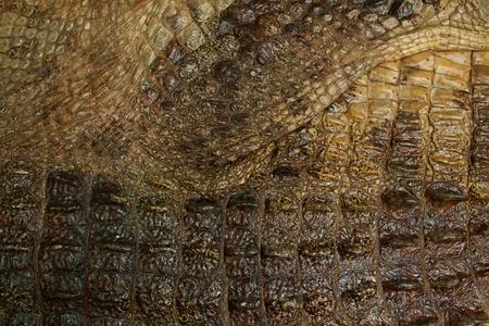 natural crocodile skin texture photo