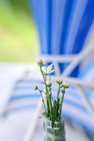 white daisy with blue background photo