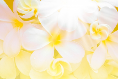 de focus: white plumeria flower on abstract green yellow blur background with light Stock Photo
