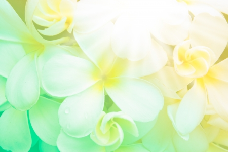 white plumeria flower on abstract green yellow blur background with light Stock Photo - 14197529