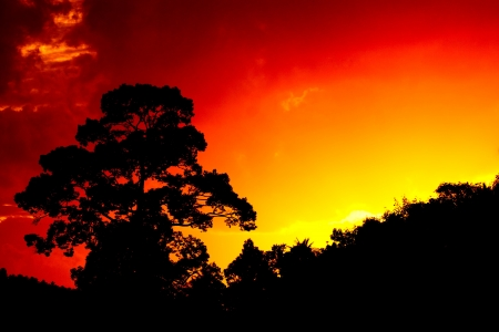Beautiful landscape image with trees silhouette at sunset  photo