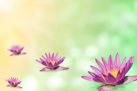 pink water lily group  on expandable blur background template in retro color tone