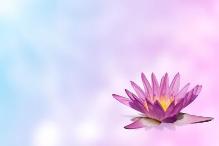 n�nuphar rose sur le mod�le de flou d'arri�re-plan extensible en teinte pastel
