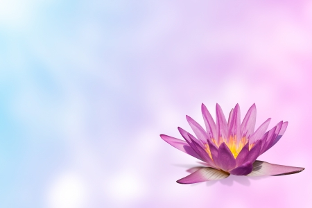 pink water lily  on expandable blur background template in pastel color tone  photo
