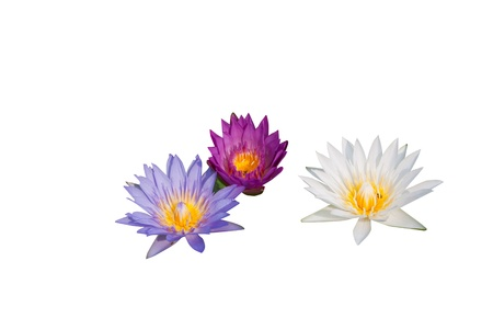 water lily group isolated on white background Stock Photo - 14888946