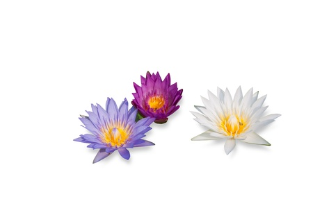water lily group isolated on white background with shadow Stock Photo - 14888947