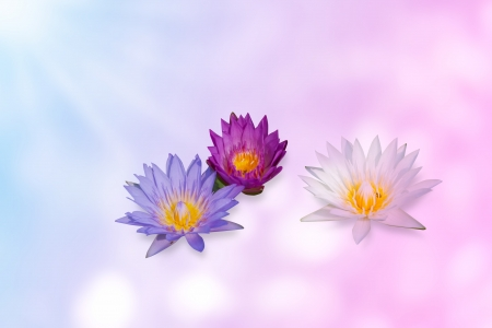 lotus effect: water lily group on expandable background template in pastel color