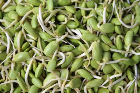 Riang Parkia seeds Thai side dishes and can makes variety of Thai curry Stock Photo - 15136784
