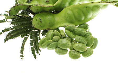 tropical stinking edible beans on white background  Parkia Speciosa  Stock Photo - 15136793