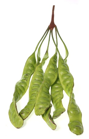 tropical stinking edible beans on white background  Parkia Speciosa  Stock Photo - 15169578