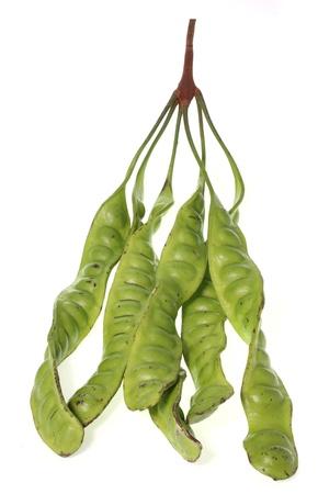 tropical stinking edible beans on white background  Parkia Speciosa Stock Photo - 15169578