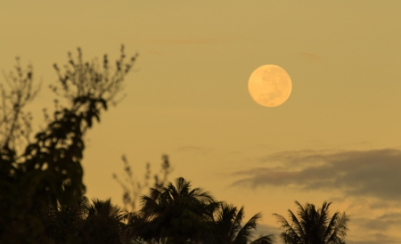 Realistic full moon over palm tree before sunrise photo