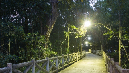 footpath in the mangrove forest at night photo