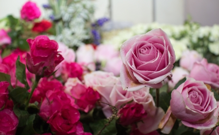 Pink rose bouquet close up background photo