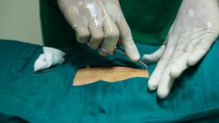 sterilization: Veterinarian sterilization operation on  dog Stock Photo