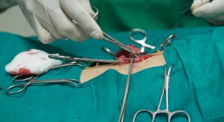 Veterinarian sterilization operation on  dog photo