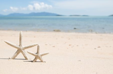 Starfish standing on the beach with island background photo
