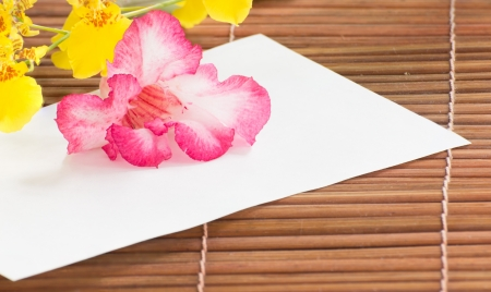 Paper and desert rose on bamboo wall photo