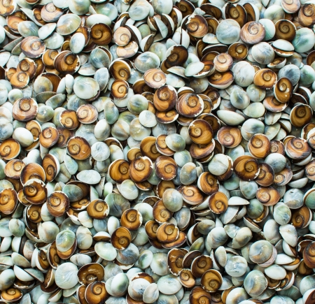 Colorful small snail shell background photo