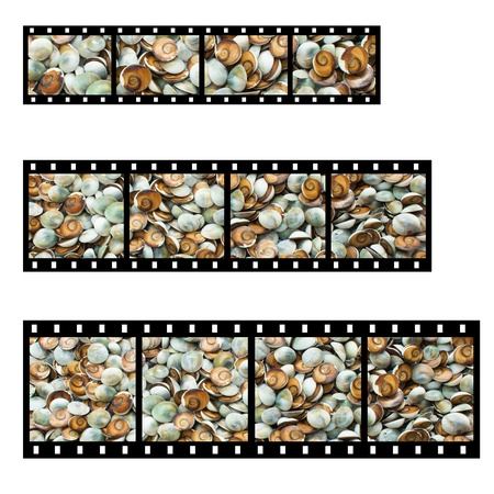 helix border: Colorful small snail shell with film strip background